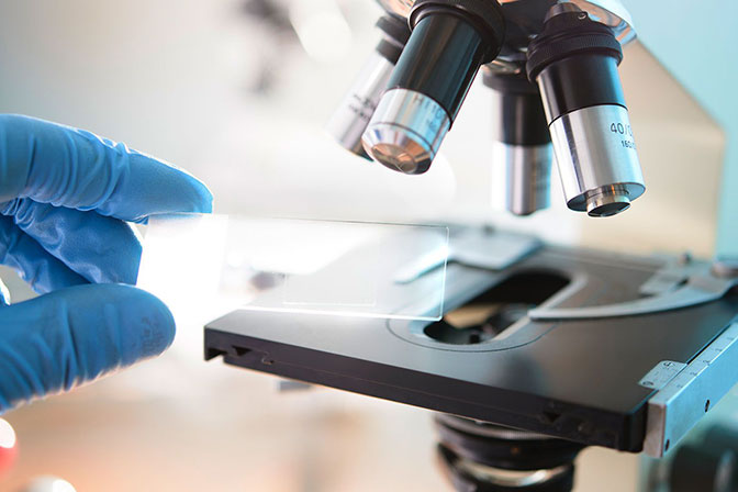 Гистологическое исследование гортани