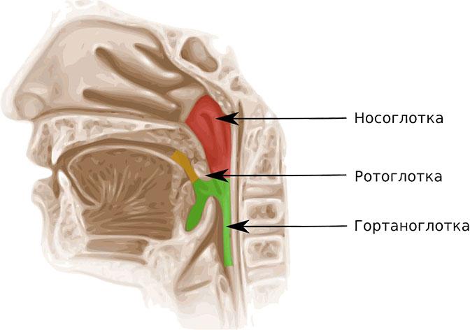 Местная симптоматика рака горла